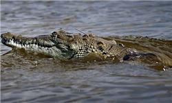 تمساح، جوان سودانی را در رود نیل بلعید