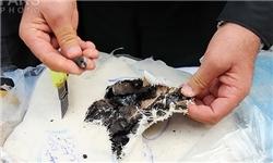 کشف 151 کیلوگرم تریاک و دستگیری 3 نفر قاچاقچی در شهریار