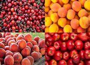 باغداران استان تهران سالانه ۱۵ هزار تُن میوه خشک تولید می کنند