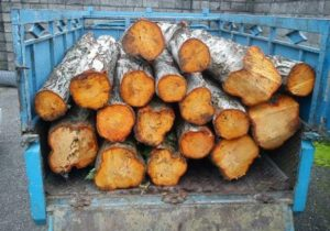 ۲.۵ تن چوب قاچاق در جنوب غرب پایتخت کشف شد