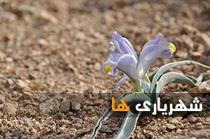 گزارش تصویری / طبیعت ناب اختر آباد