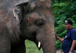 «تنهاترین فیل دنیا» پس از ۳۵ سال به طبیعت بازگردانده میشود
