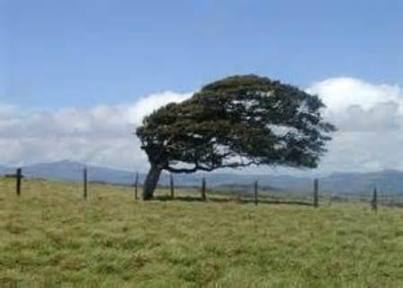 پایان وزش باد شدید در شهریار