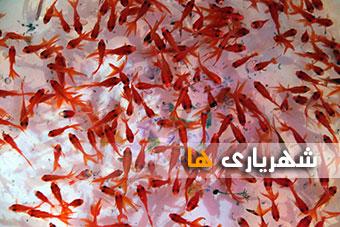 گزارش تصویری/ تب خرید شب عید در شهریار