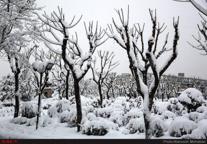 آغاز بارشهای برف و باران در ۴ استان/ موج جدید بارشها در تهران